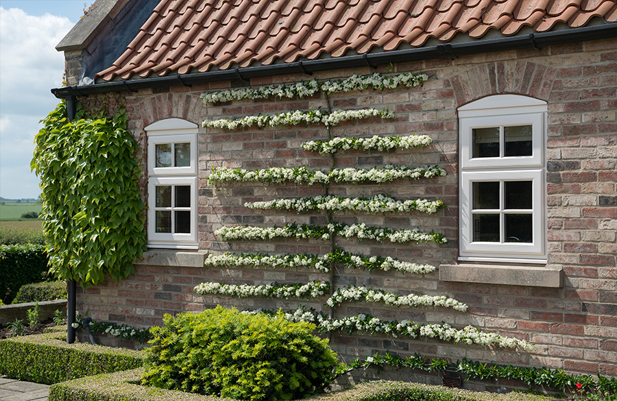 Double Casement Windows Prices